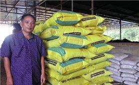 Tận dụng vỏ củ mì làm phân vi sinh