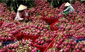 Nông sản Việt: Xuất khẩu nhiều nhưng vẫn có... vị đắng