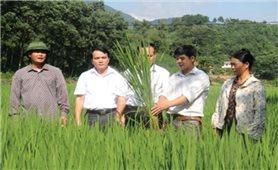 Đa dạng thương hiệu sản phẩm nông nghiệp