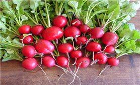 Kỹ thuật trồng củ cải đỏ
