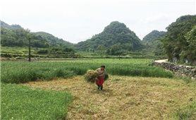 Hiệu quả từ chính sách hỗ trợ trực tiếp cho người nghèo vùng khó khăn