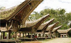 Cuộc sống thanh bình của người Toraja