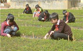 Hoạt động trải nghiệm trong trường học: Khơi dậy tính chủ động, sáng tạo của học sinh