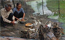 Hỗ trợ gia đình Người có công thoát nghèo: Cách làm hiệu quả ở Cà Mau
