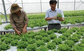 Khởi nghiệp làm giàu từ nông nghiệp: Nhìn từ các mô hình ở Bình Phước