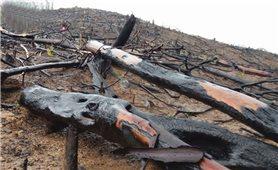 Rừng phòng hộ Bà Đà bị tàn phá
