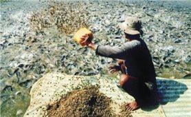 Phạt đến 200 triệu đồng vi phạm hành chính về lĩnh vực thức ăn chăn nuôi, thủy sản