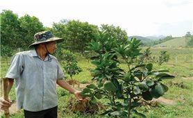 Chủ động chuyển đổi cơ cấu cây trồng, vật nuôi