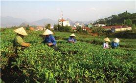 Làm giàu nhờ Quỹ Hỗ trợ nông dân