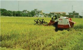 Dồn điền đổi thửa ở Vĩnh Tường (Vĩnh Phúc): Tạo đà cho sản xuất nông nghiệp trình độ cao