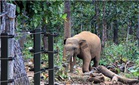 Voi rừng lại xuất hiện gần nhà dân ở Đồng Nai