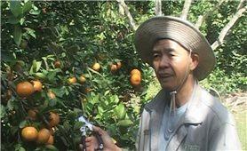 Người tiên phong chuyển đổi cây trồng ở Đạ R'sal
