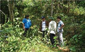 Nậm Cần tập trung hỗ trợ đồng bào trồng rừng thay thế
