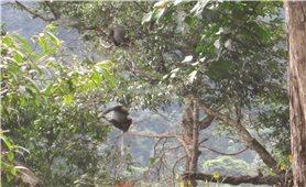 Nơi bình yên cho những loài động, thực vật bị săn lùng