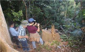 Từ những vụ phá rừng lớn ở Bình Định: Lỗ hổng trong công tác quản lý bảo vệ rừng