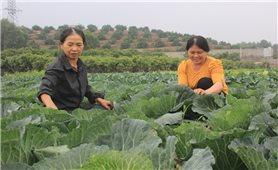 Bắc Giang: Phát huy hiệu quả từ chương trình hỗ trợ sản xuất