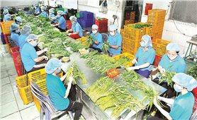 Mở đường nông sản Việt vào thị trường Trung Đông-châu Phi