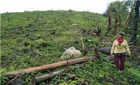Cần quản lý chặt chẽ đất đai có nguồn gốc từ nông, lâm trường