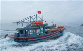 Cà Mau: Nhiều bất cập trong quản lý phương tiện đánh bắt cá gần bờ