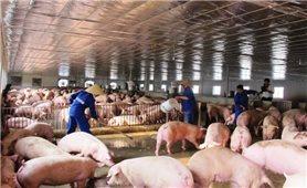 Tập trung ngăn chặn bệnh Dịch tả lợn Châu Phi xâm nhiễm vào Việt Nam