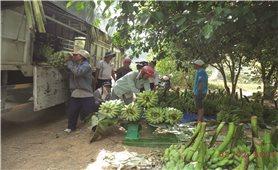 Khánh Hòa: Tập trung phát triển vùng đồng bào DTTS