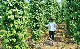 Áp dụng công nghệ tưới nhỏ giọt, nâng cao hiệu quả cây trồng