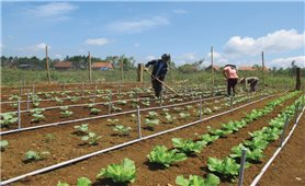 Đào tạo nghề cho lao động nông thôn ở Bình Định: Đầu vào khó, đầu ra còn khó hơn