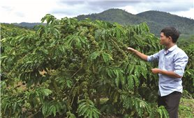 Tạo sinh kế cho người dân tham gia bảo vệ rừng