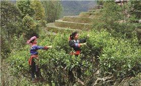 Phát triển kinh tế-xã hội vùng DTTS, miền núi: Những ý kiến đầy trách nhiệm