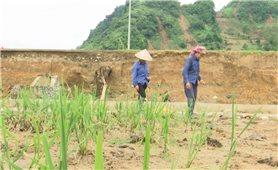 Yên Bái: Khôi phục sản xuất ở vùng lũ