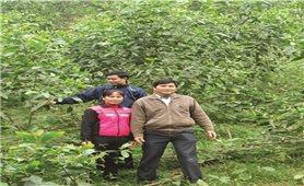 Yên Bái: Hiệu quả từ phát triển kinh tế đồi, rừng
