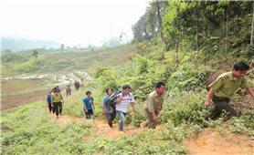 Lục Yên (Yên Bái): Nhiều biện pháp giữ rừng hiệu quả