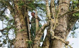 Người dân ngủ trên cây để canh trộm