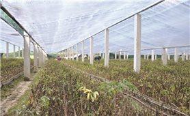 Quản lý, sử dụng đất đai có nguồn gốc từ nông, lâm trường