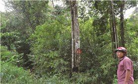 Đăk Hà (Kon Tum): Hiệu quả từ giao khoán rừng phòng hộ cho cộng đồng