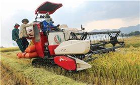 """Làm gì để """"chắp cánh"""" cho sản phẩm nông nghiệp xuất khẩu?"""