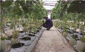 Nông dân Tây Ninh làm nông nghiệp công nghệ cao