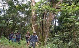 Hiệu quả từ chính sách chi trả dịch vụ môi trường rừng: Nhìn từ Kon Tum