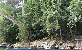 Ứng dụng công nghệ cao trong lâm nghiệp: Tính cấp thiết trong quản lý, bảo vệ rừng