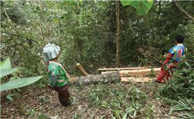 Để cộng đồng thực sự là chủ rừng