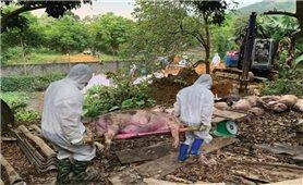 Lai Châu: Nhiều giải pháp ngăn chặn dịch tả lợn châu Phi