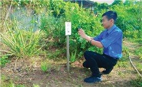 Sáng kiến bảo tồn cây thuốc Nam của sinh viên Nguyễn Văn Thuận