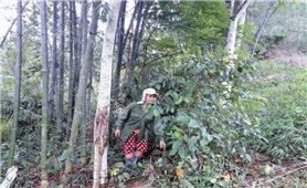 Thanh Hóa: Người dân mỏi mòn chờ tiền hỗ trợ bảo vệ rừng