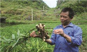 Cao Bằng: Đưa nông sản hữu cơ thành thế mạnh