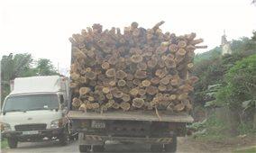 Thừa Thiên - Huế: Xe quá tải lộng hành ở miền núi