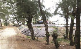 Quảng Ngãi: Phá rừng phòng hộ để nuôi tôm