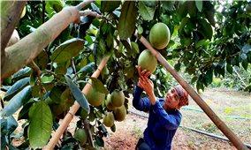 Bắc Giang: Chuyển đổi cơ cấu cây trồng đúng hướng làm giàu cho nông dân