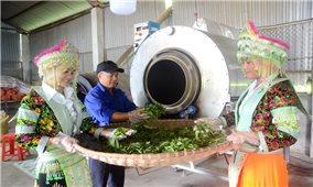 Tuyên Quang: Mở lối thoát nghèo từ tập trung phát triển hợp tác xã