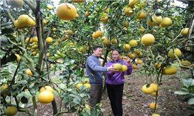 Lục Ngạn - Thủ phủ cây ăn quả lớn nhất của miền Bắc