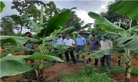 Chủ tịch huyện người Tà Ôi với công tác giảm nghèo ở A Lưới